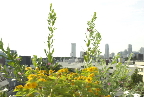 表参道にある自然光たっぷりなパリジェンヌ風キッチン付きハウススタジオ アトリエスタジオchambre des étoiles
